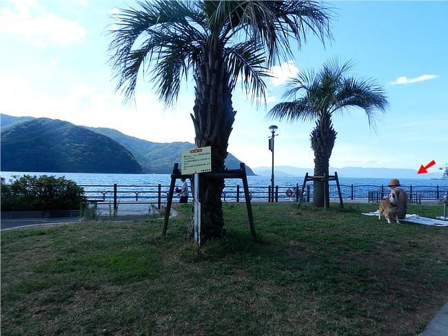 舞鶴親海公園のヤシの木