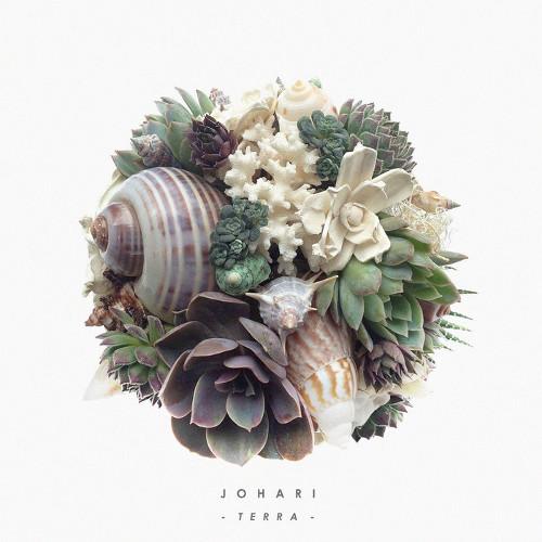 Johari 「Terra」